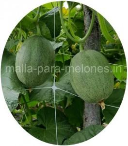 Malla para melones.
